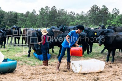 Generation Z kids feeding cattle on family farm